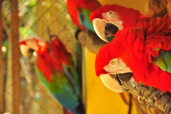 Oferta Relâmpago: 1 Ingresso Individual (adulto ou criança) com muitas atrações por apenas R$12 no Ecopoint