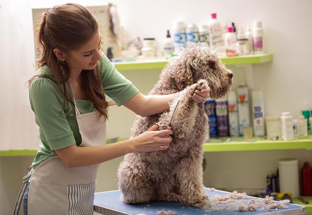 Banho para Cachorro Tamanho P (até 10kg) + Tosa Higiênica + Higienização do Ouvido + Corte de Unhas de R$50 por R$24,90