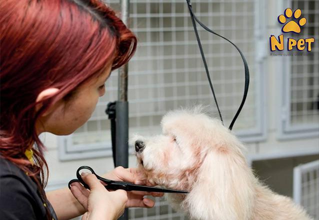 Cachorros até 10kg de R$58 por apenas R$37,90
