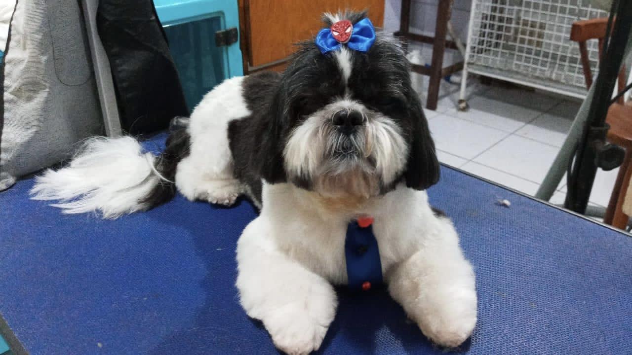 VÁLIDO PARA SEGUNDA E TERÇA: Banho especial (banho, corte de unha, limpeza do ouvido) cães de pequeno porte (até 10kg) por apenas R$19,90